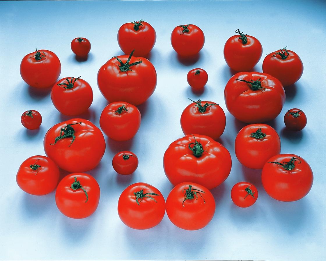 09-05-1996 (tomates)