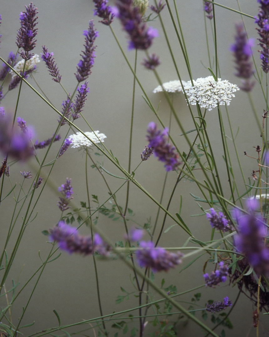 Fleurs / s.t. XXIII
