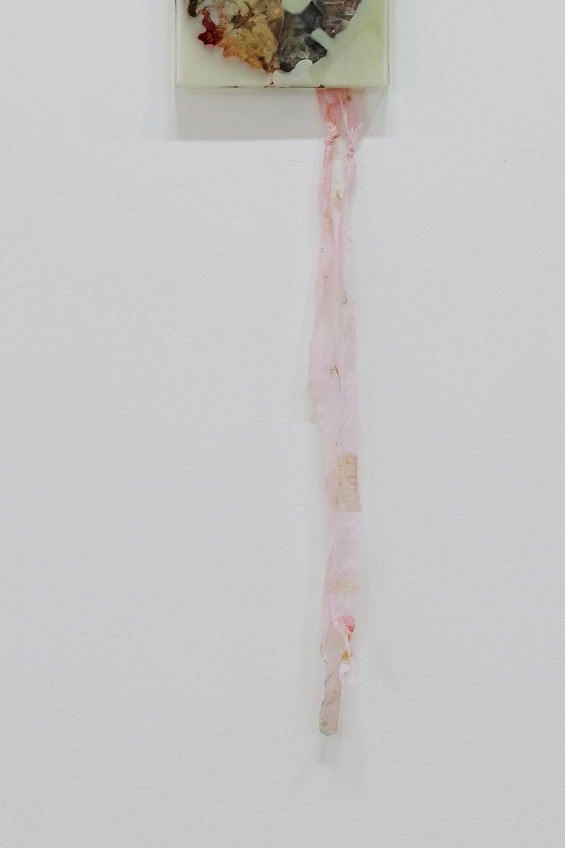 Mimosa Echard