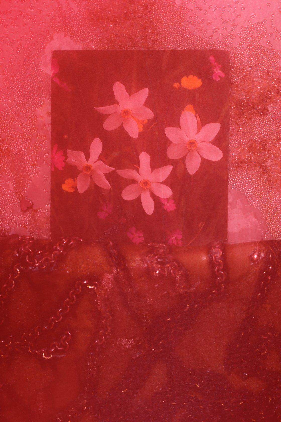 Mimosa Echard, Narcisse 4, 2021
