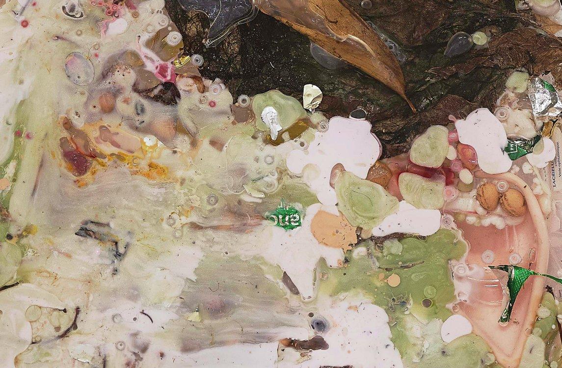 Mimosa Echard Collection Lambert